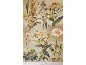 Botanický list II