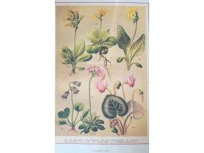 Botanický list jarní květy