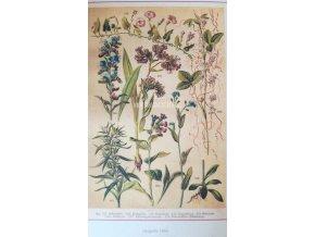 Botanický list III