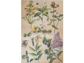Botanický list IV