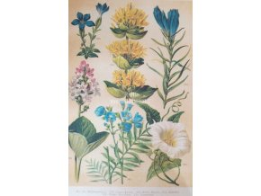 Botanický list VI