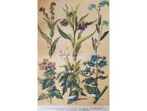 Botanický list VII