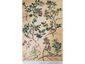Botanický list VIII
