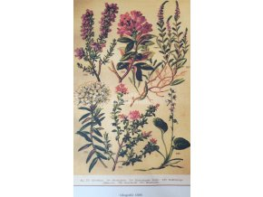 Botanický list IX