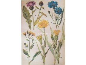 Botanický list luční květy I