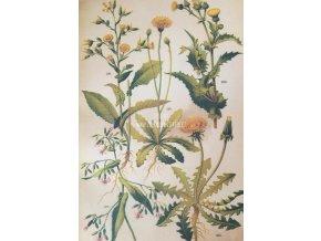 Botanický list luční květy II