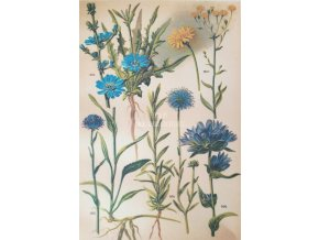 Botanický list luční květy III