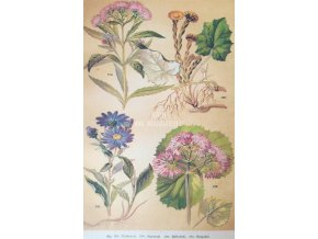 Botanický list X