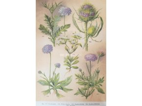 Botanický list XI