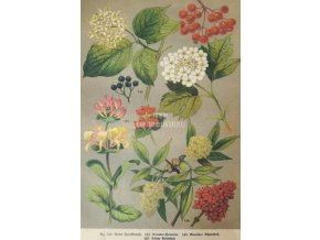 Botanický list plody I