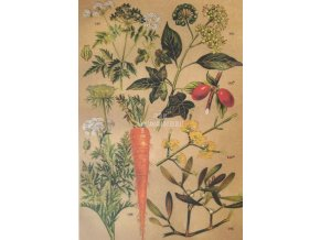 Botanický list plody II