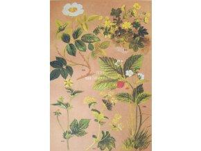 Botanický list lesní plody I