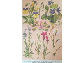 Botanický list XIII