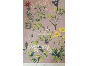 Botanický list XIV