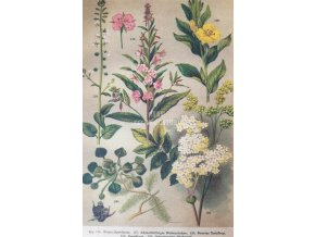 Botanický list XVII