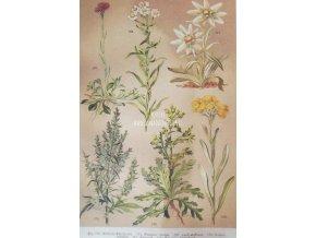 Botanický list XVIII