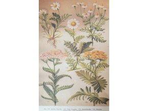 Botanický list XIX