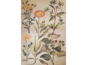 Botanický list XX