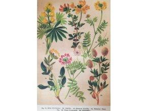 Botanický list XXI