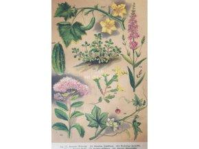 Botanický list XXII