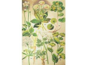 Botanický list XXIII