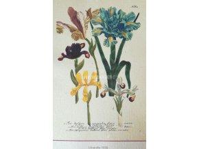 Botanický list kosatce A5