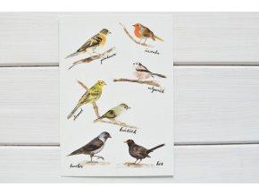 pohlednice ptacci2