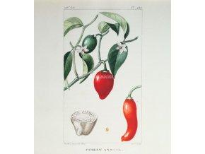 Papričky