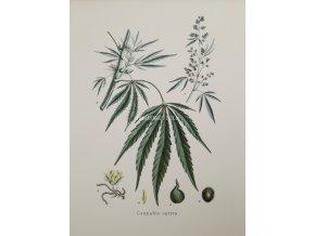 Cannabis I