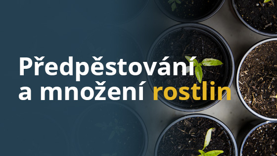 Jak na předpěstování a množení rostlin