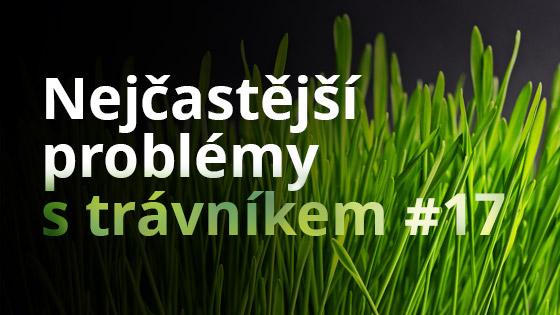Nejčastější problémy s trávníkem #17