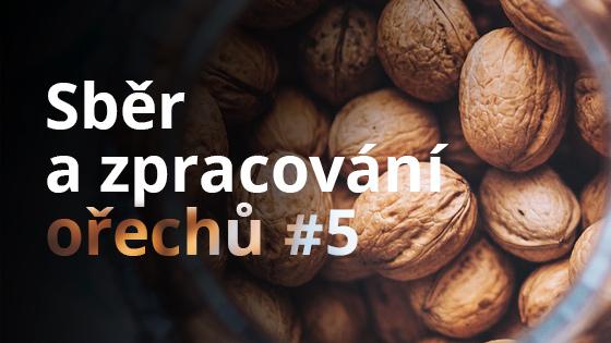 Sběr a zpracování ořechů #5
