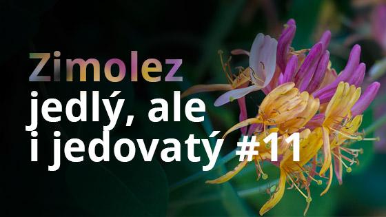 Zimolez - jedlý, ale i jedovatý #11