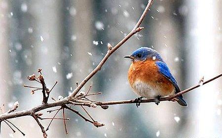 ptacek zima