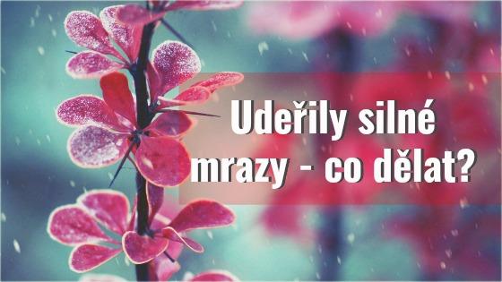 silne-mrazy-zahrada