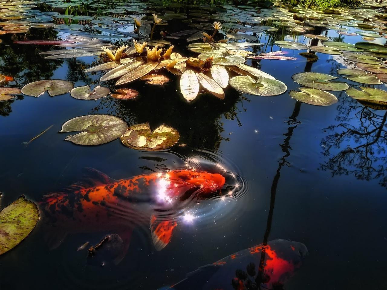 jezirko-podzim