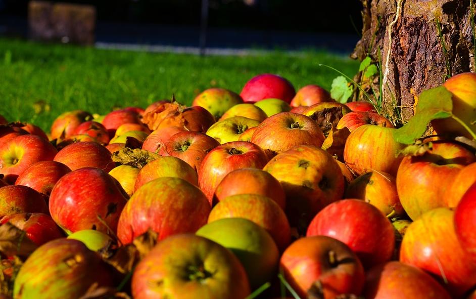 jablka-podzim