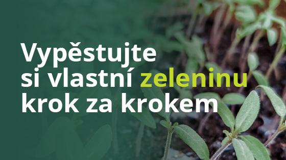 blog-vypestovat-zeleninu