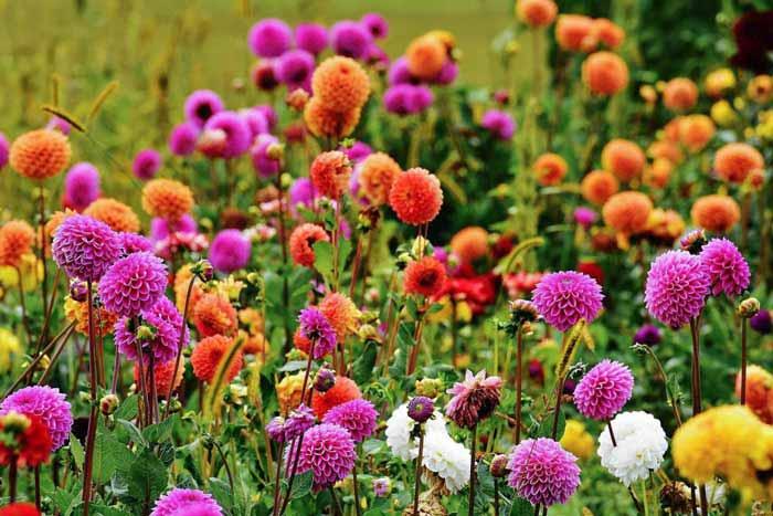 jezkuv-zahradni-kalendar-duben