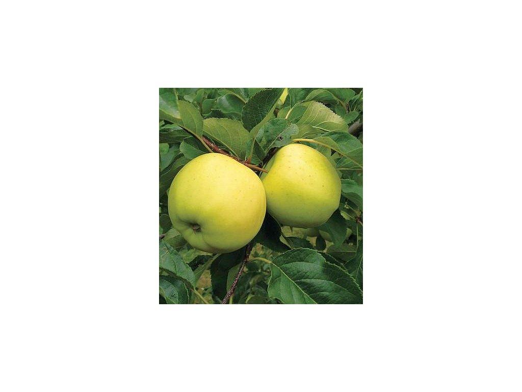 LUNA pozdně zimní jabloň 2