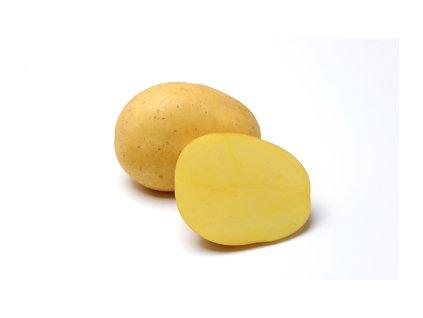 BELANA, raná odrůda brambor, varný typ A/AB