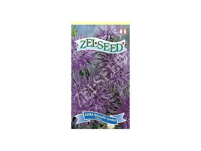 astra ihlicovita vysoka fialova 07g zelseed