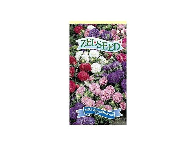 astra chryzantemokveta nizka zmes 07g zelseed