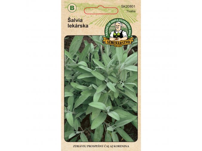 Salvia lekarska