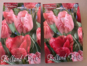Tulipán Triumph Hemisphere