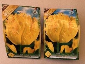 Tulipán Parrot Texas Gold