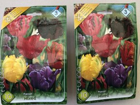 Tulipán Parrot mix farieb