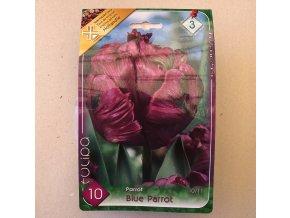 Tulipán Parrot Blue Parrot
