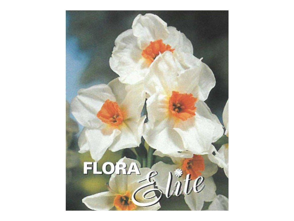 Narcis Multiflowered Geranium 5 ks, 12/14