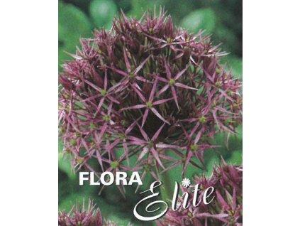Allium christophii 3 ks, 12/14